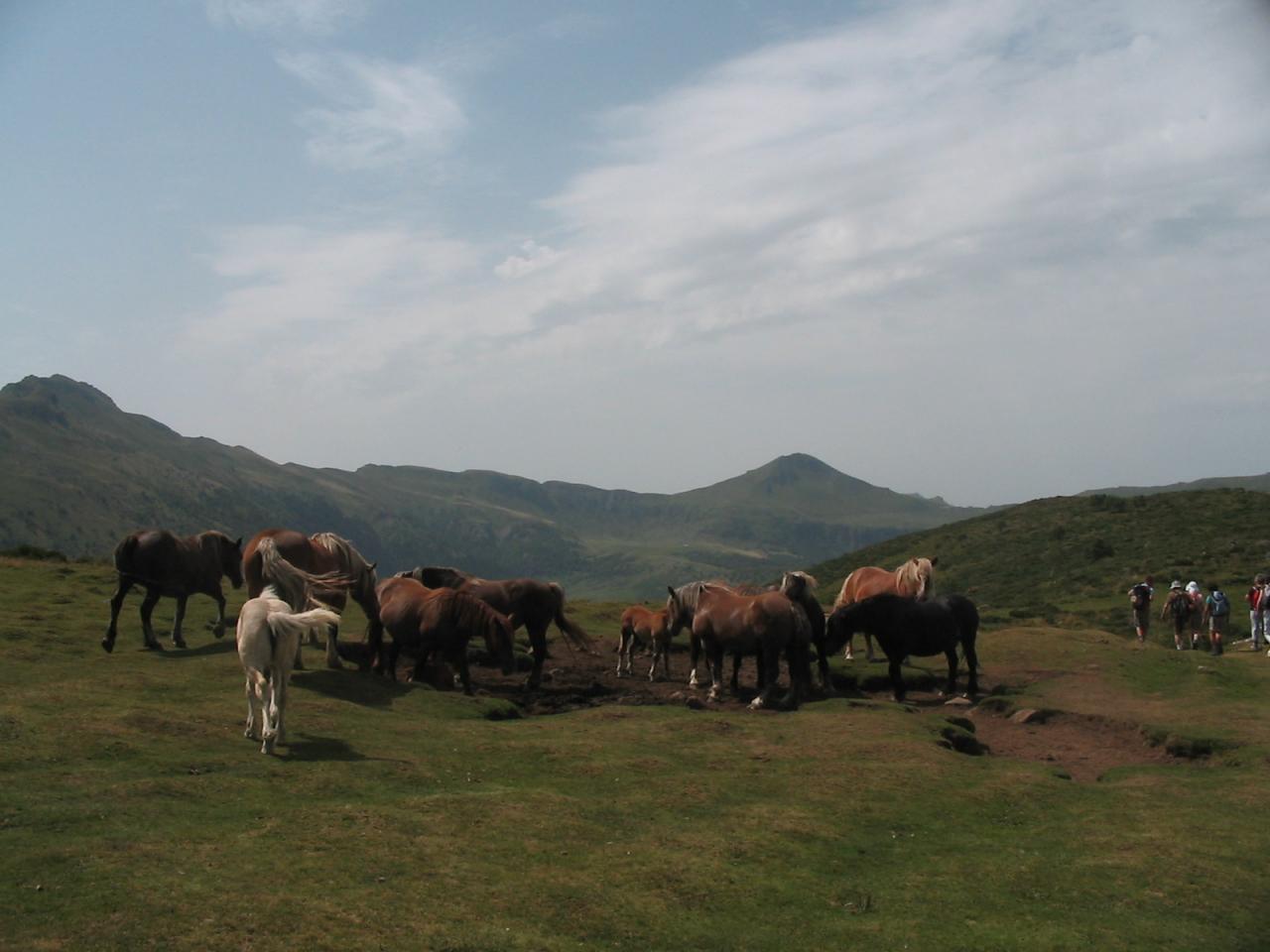 Chevaux devant le Puy Mary